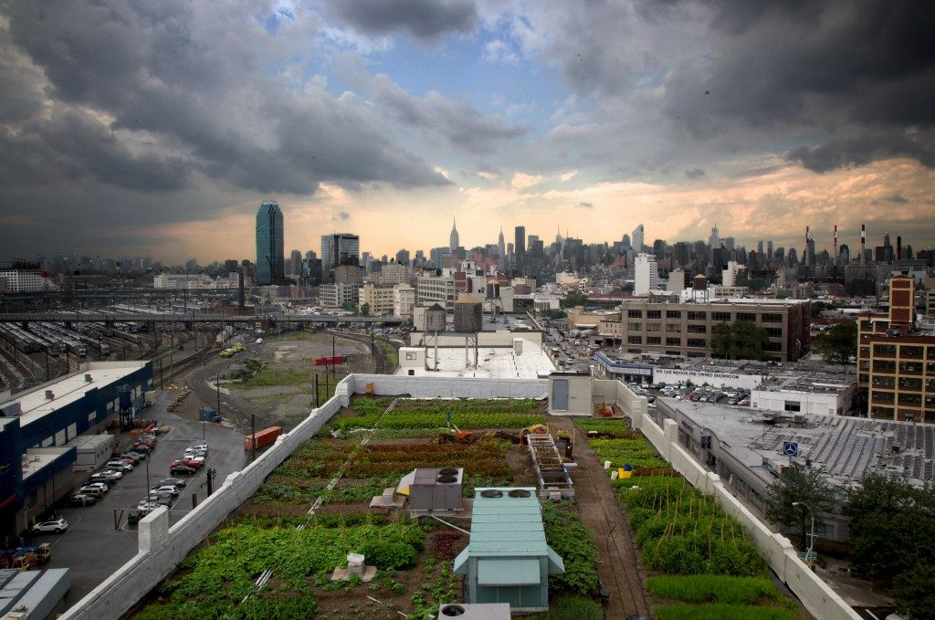 Transition alimentaire - agriculture urbaine - brooklyn - ville durable - toit potager -