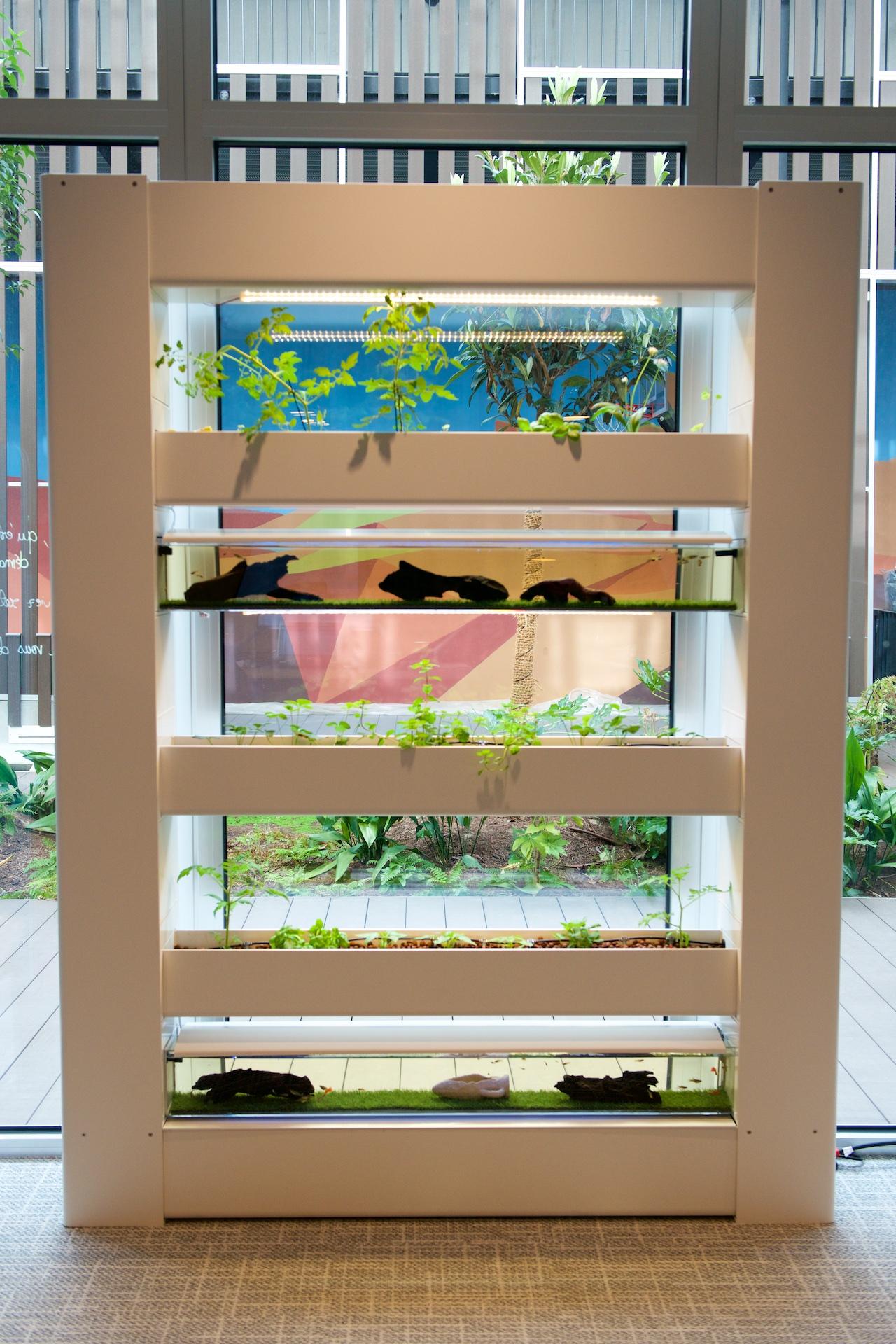 AURA produit - espace de travail - Ecosystème - Poissons - Plantes comestibles - Aquaponie - Agriculture urbaine - Agriculture Indoor - bureaux - qualité de vie au travail - bien-être au travail