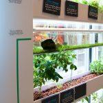 AURA écosystème aquaponie travail espace bien-être aménagement agriculture indoor potager