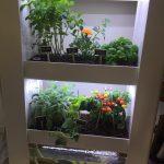 Potager système espace de travail plantes comestibles poissons aquaponie AURA agriculture indoor