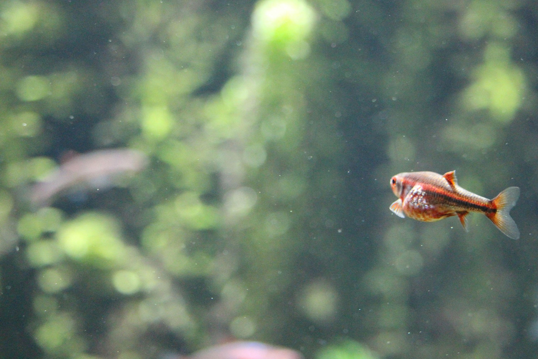 Aquaponie AURA découvrir sensibiliser poissons plante écosystème agriculture