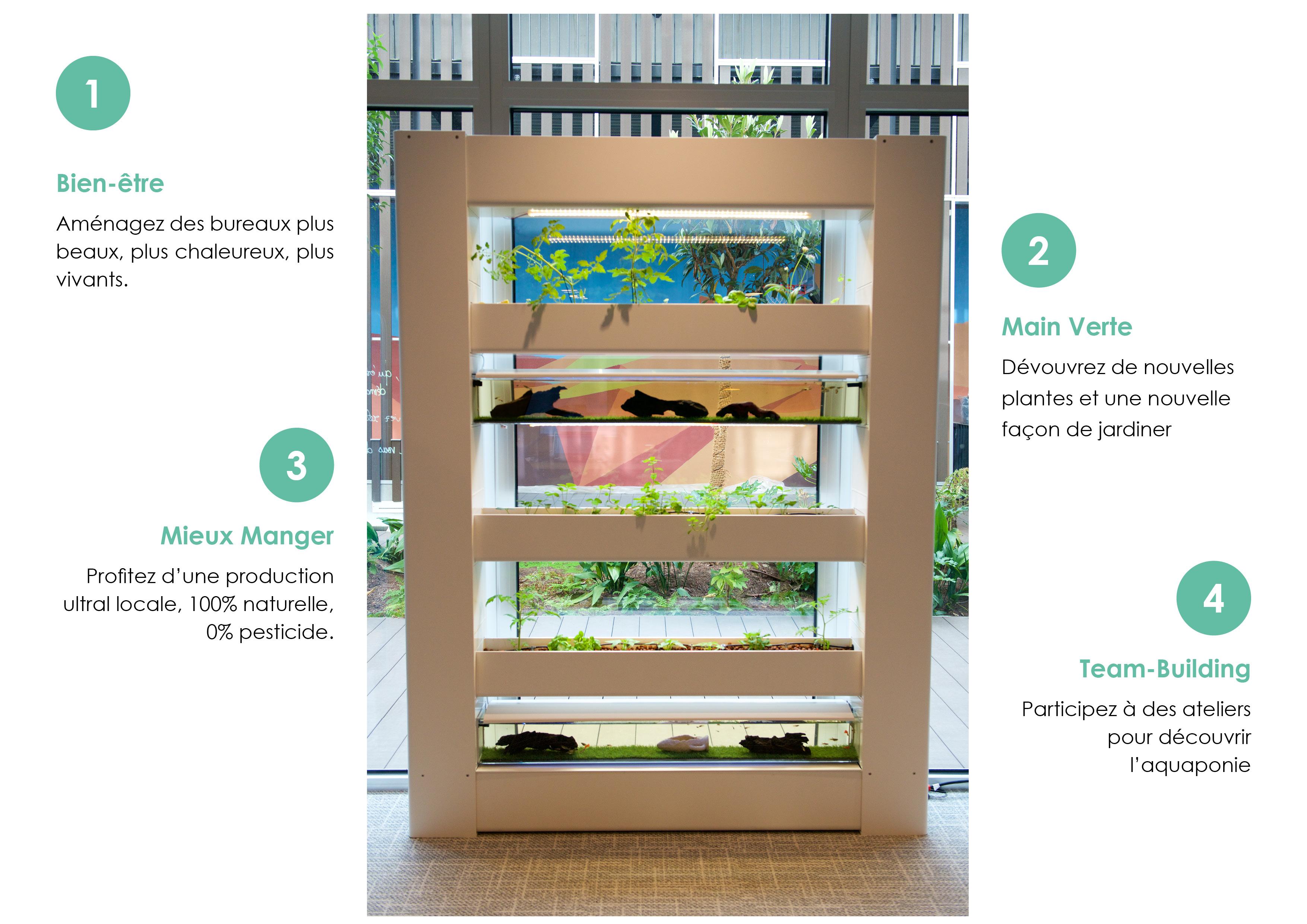 écosystème AURA : Bien-être, Main verte,  Team-building, Mieux Manger