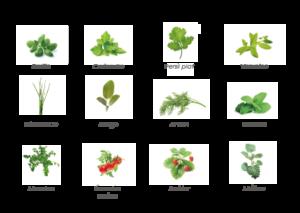 Basilic, Coriandre, Persil, Verveine, Ciboulette, Sauge, Aneth, Menthe, Mesclun, Tomates cerises, Fraisier, Mélisse