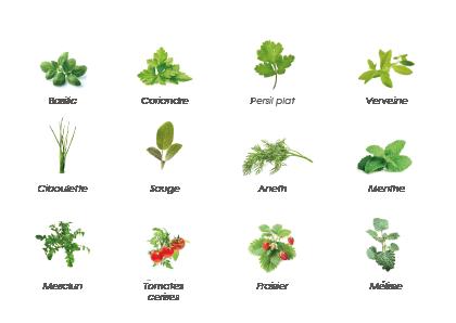 Les plantes qui poussent dans le Baromate