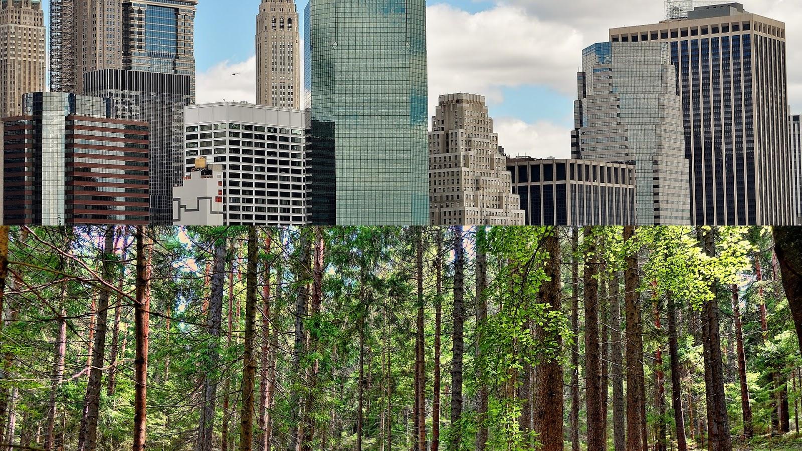 Faire entrer la Nature dans vos bureaux est bon pour les affaires