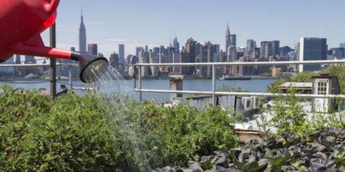 L'agriculture urbaine : des paysans dans la ville