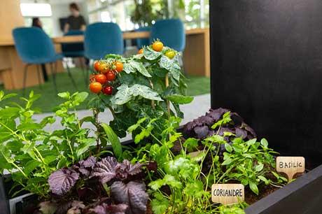 Jardiner au bureau