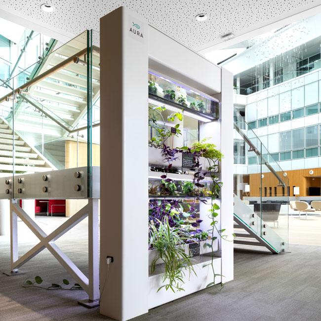 Végétalisation simple et rapide des espaces de travail par Aura
